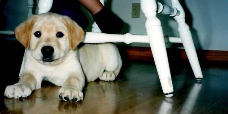 Can I really teach my dog to empty (aka go potty) on command?
