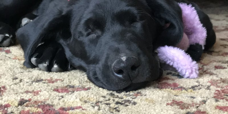 Choosing a name for your (gun dog) puppy