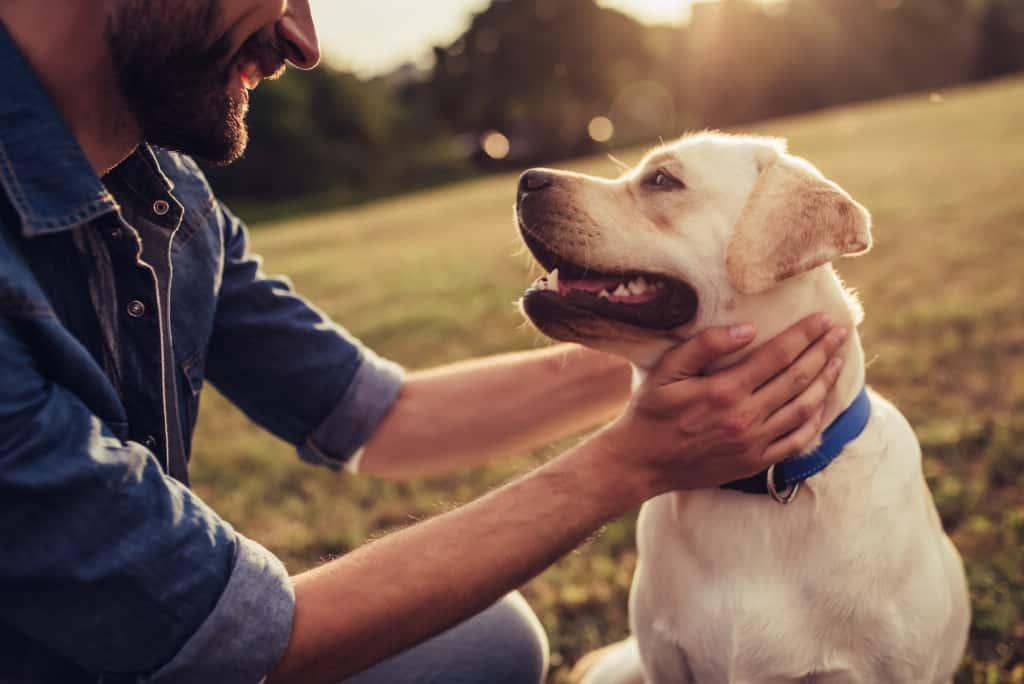 how to train a Labrador