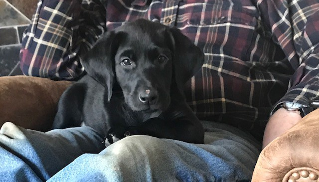 training puppy 2-3 months old