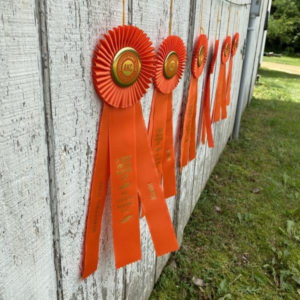 hunt test ribbons