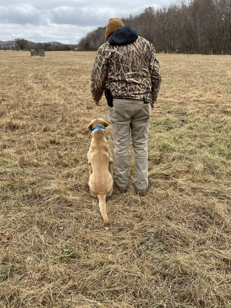 one on one training for retrievers