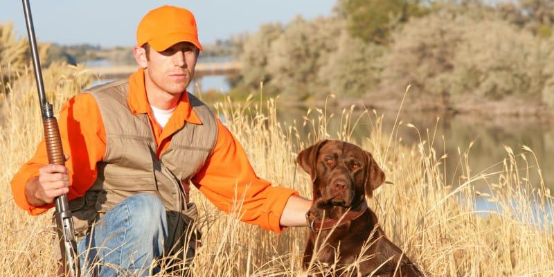 How to introduce your Labrador retriever to gunfire