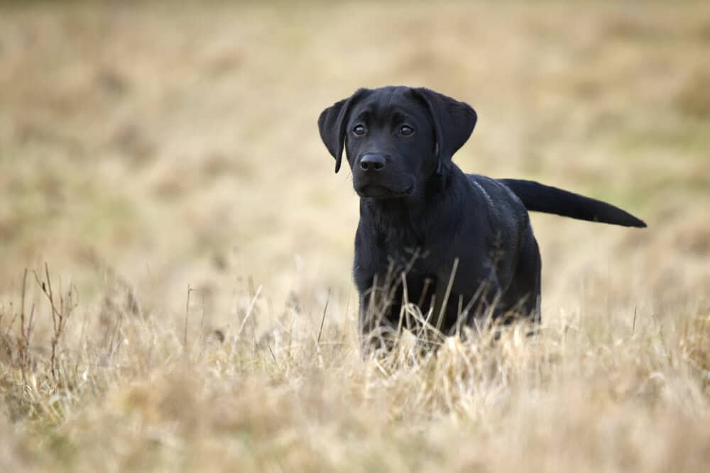 other factors for dog training