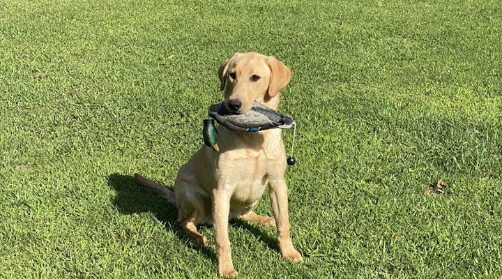 What kind of bumpers/dummies should I use to train my retriever?
