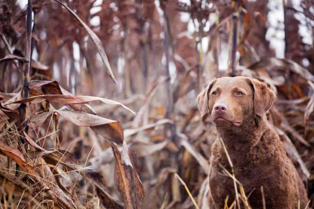 hunting training programs