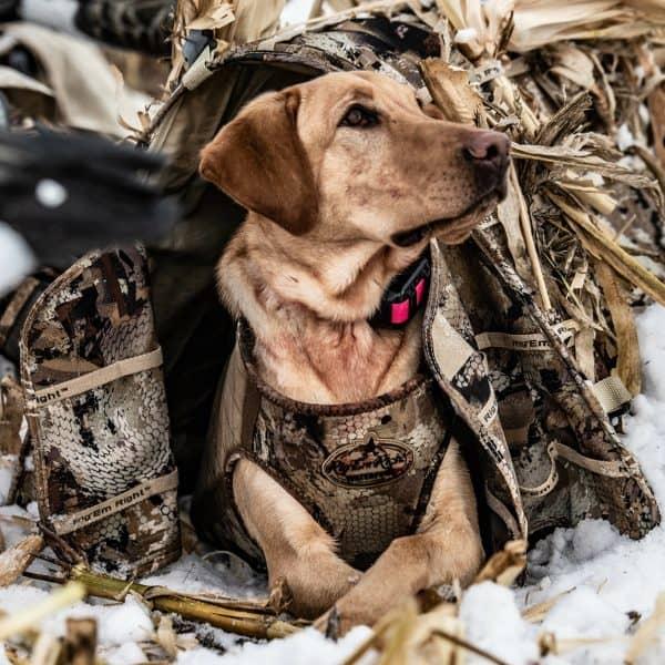Sportsman hunting training program