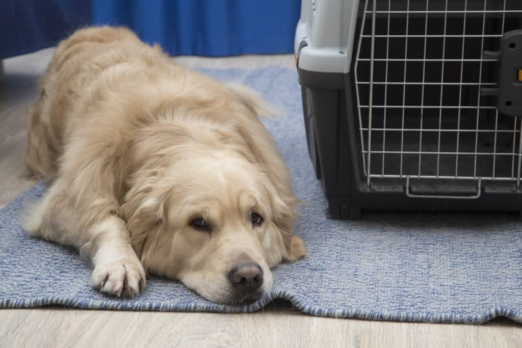 how to crate train a retriever puppy