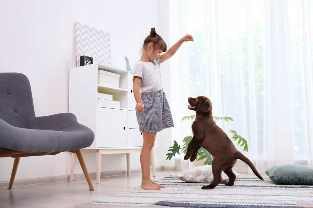 puppy jumping on child