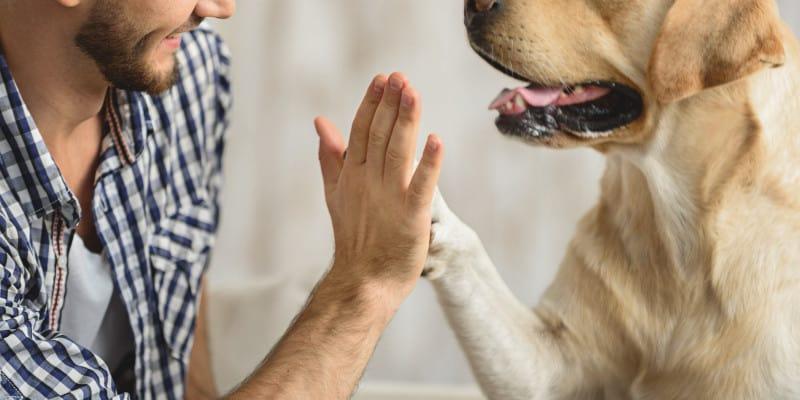 is it okay to teach hunting dog tricks