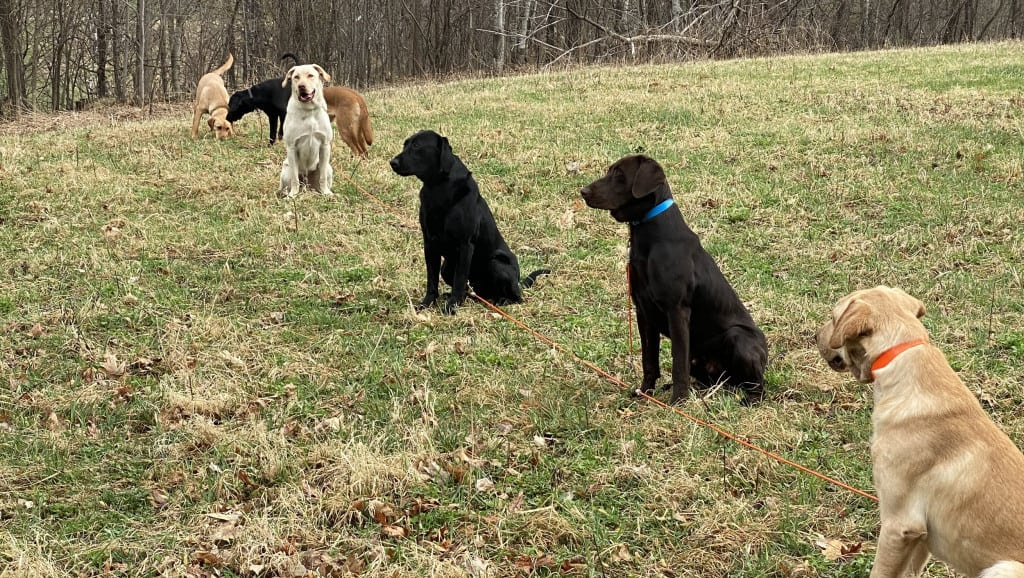tie outs for retriever training