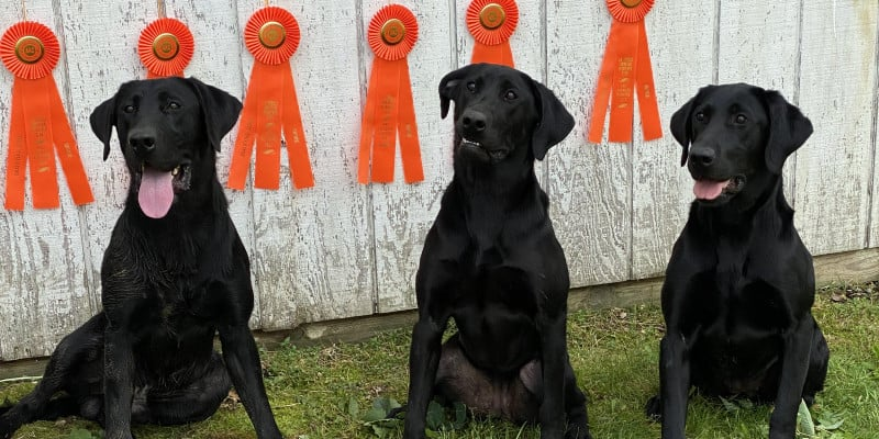 why compete retriever hunt tests