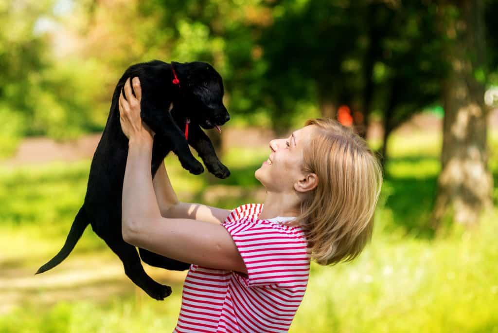 retriever puppy pedigree